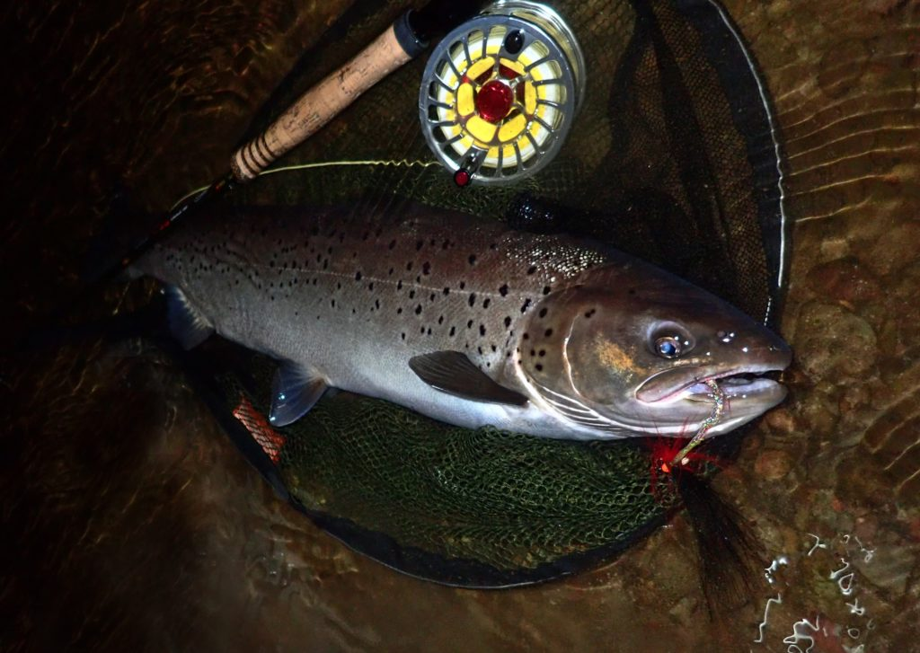Sea trout fishing in wales
