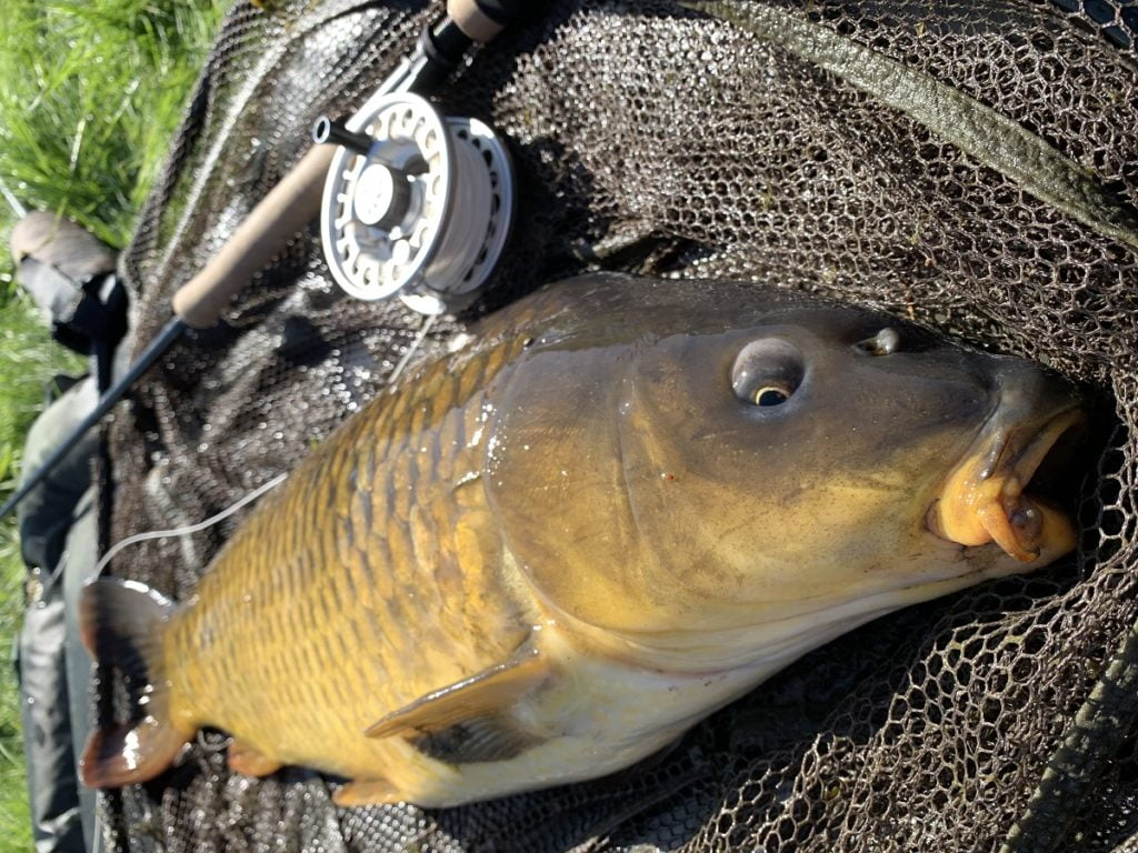carp fishing in wales