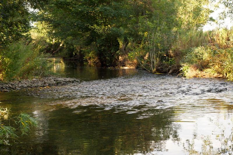 river alyn fishing wrexham