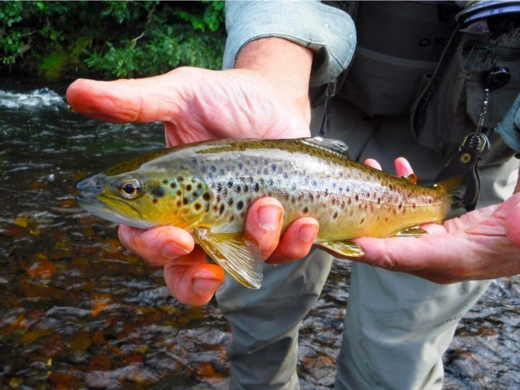 River Rhondda brown