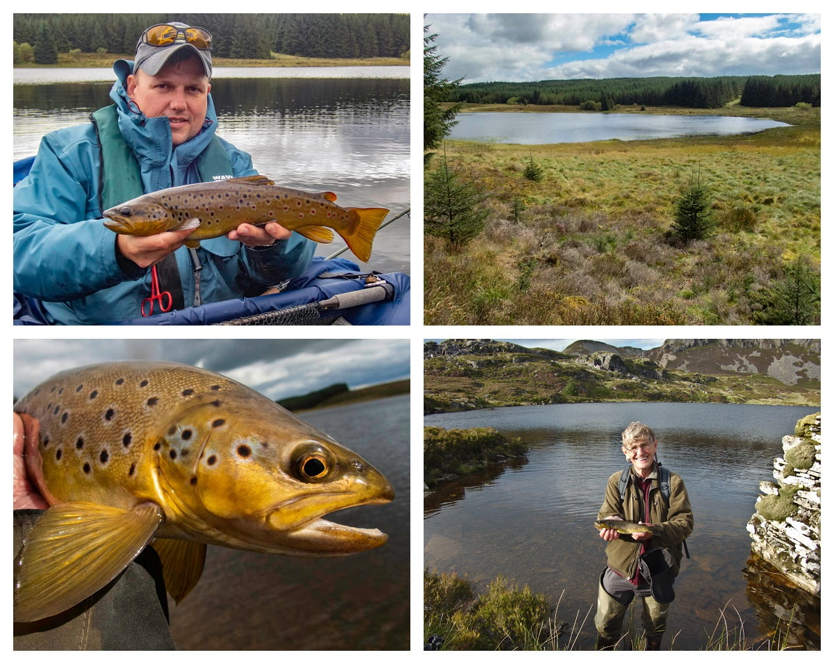Wild brown trout llyn fishing Wales