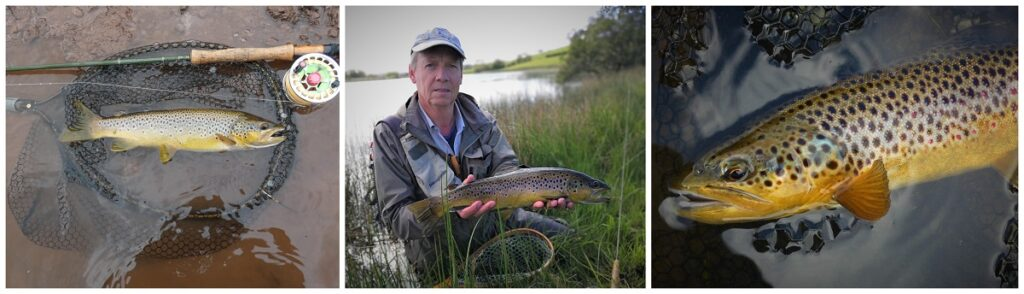 wild trout fishing wales