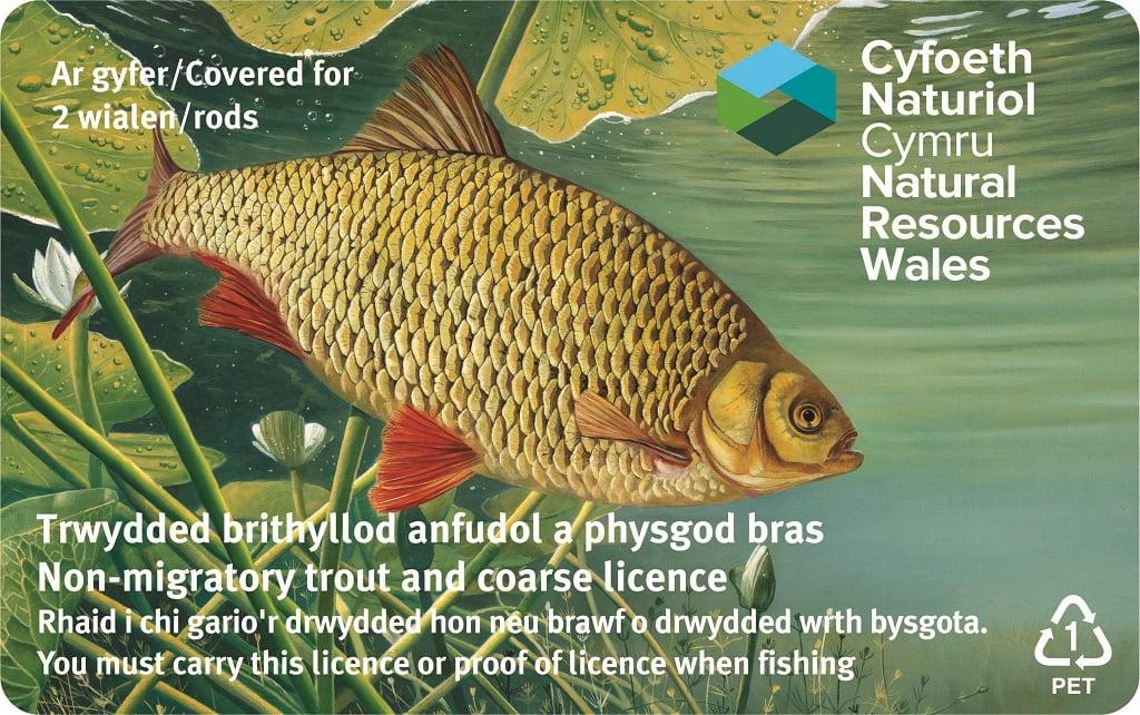 fishing rod license Wales