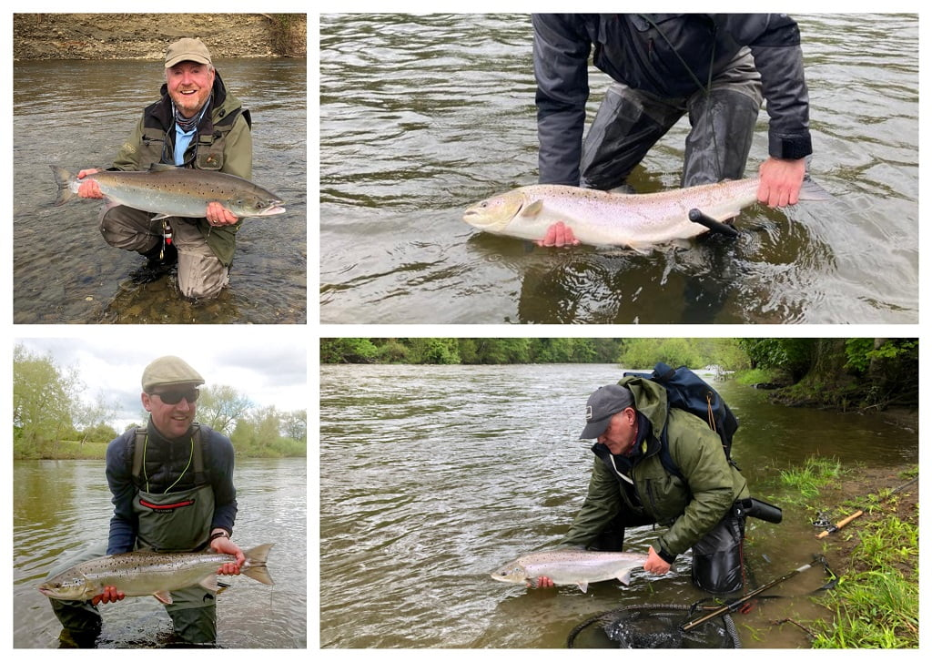 salmon from Welsh rivers