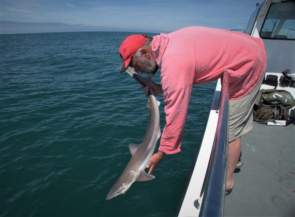 tope fishing on a Welsh Charter boat